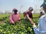 Why tea garden workers are crucial in Bengal, Assam polls?